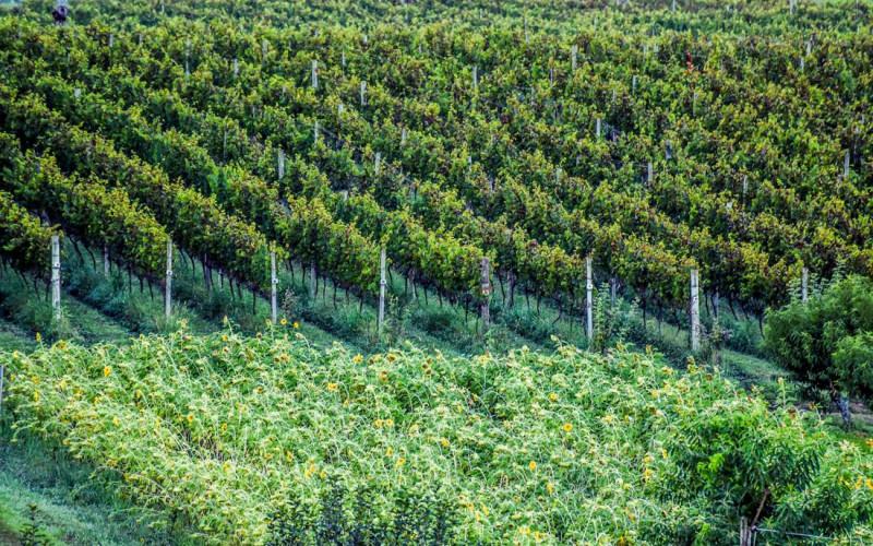 Comunicado - Don Giovanni suspende visitação de turistas na vinícola temporariamente